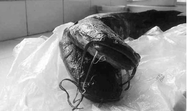 two-headed-catfish-caught-in-china1